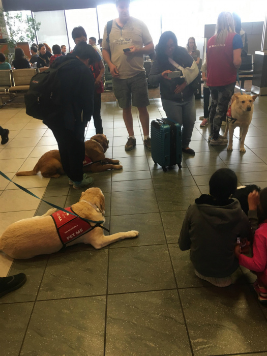Терапевтические собаки в аэропорту. | Фото: Emefka.