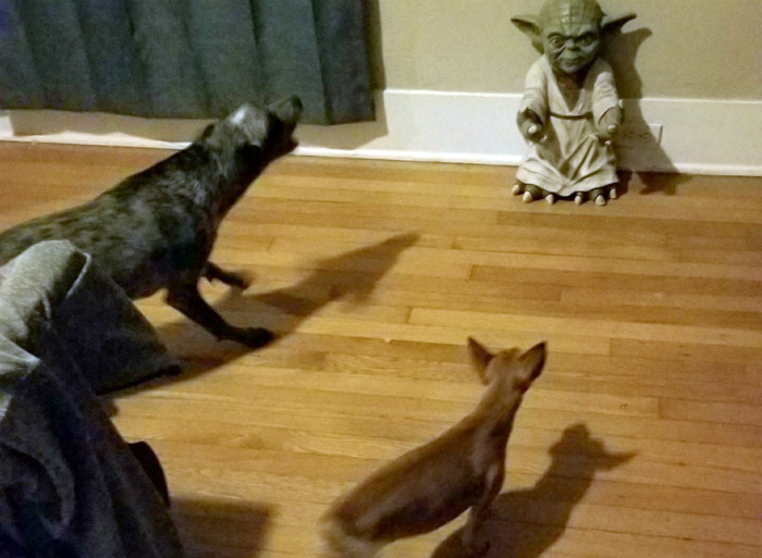 Мастер Йода и компания.