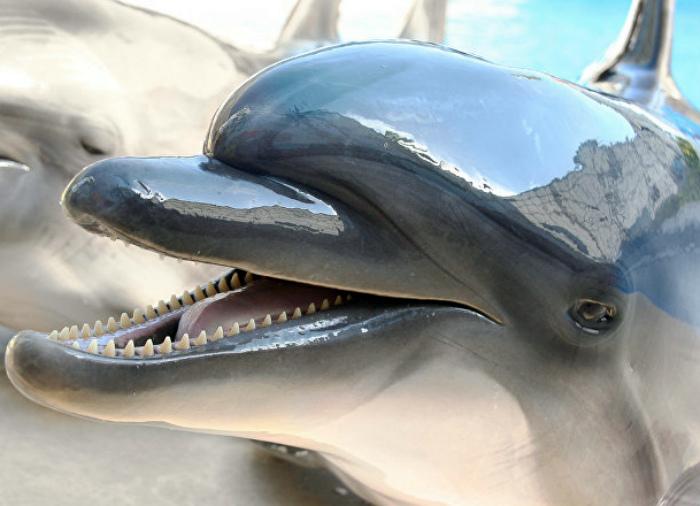 Охота на дельфинов В Японии.