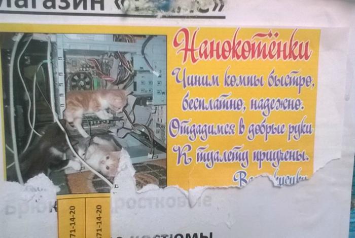 Котята чинят компы, но это еще не точно... | Фото: Joinfo.ua.
