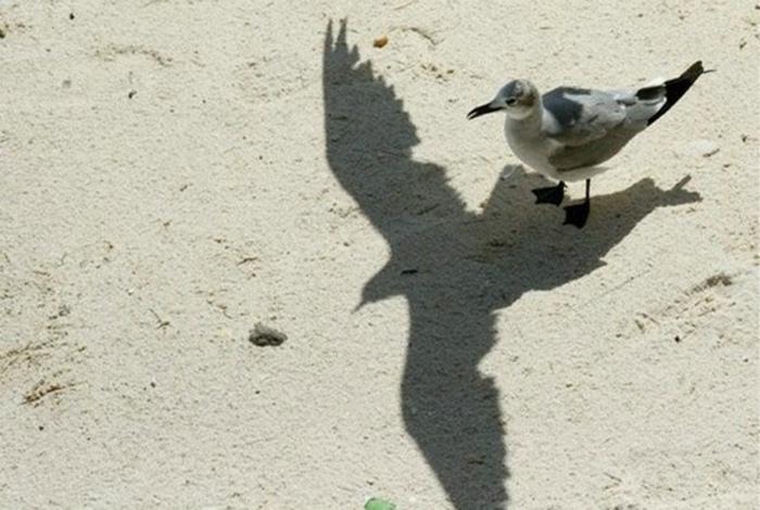 Тень другой птицы.