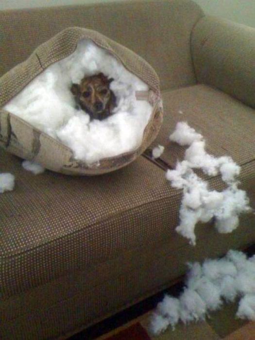 По мнению Novate.ru, этот пёс, как и всякий дикий зверь, нашёл себе нору на зиму. | Фото: BlazePress.