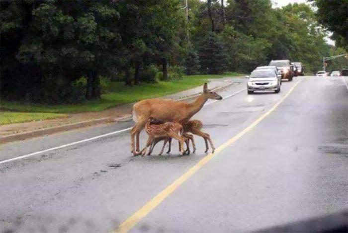 Мать кормит детей и пусть весь мир подождет!   Фото: Szeretlek Magyarorszаg.