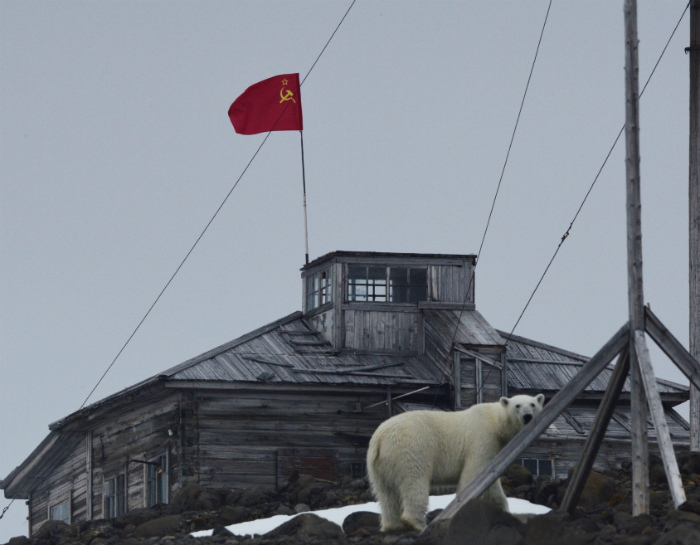 Классика жанра: снега, флаг, медведь.