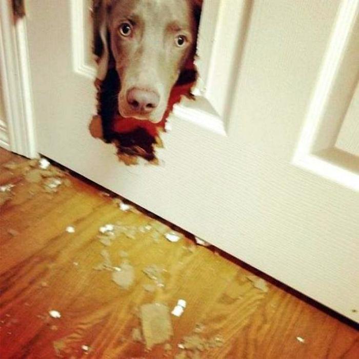 Прогрыз дверь.