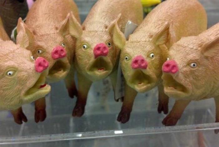 Очаровательная група свиней.