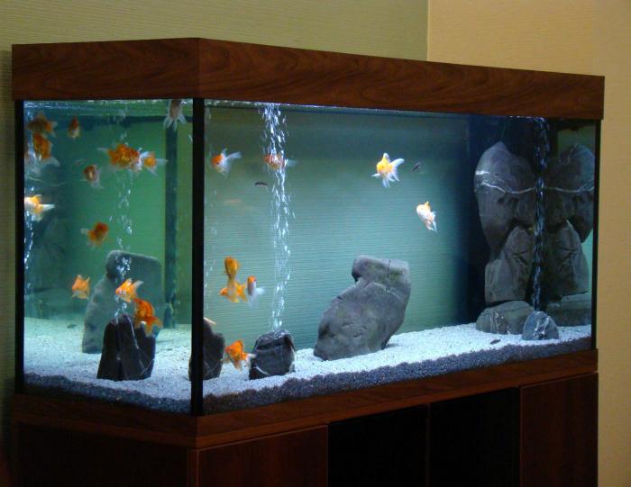 Чистка клеток и аквариумов.