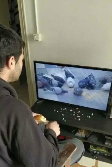 «Что-то голуби совсем не голодные...» | Фото: NTV.