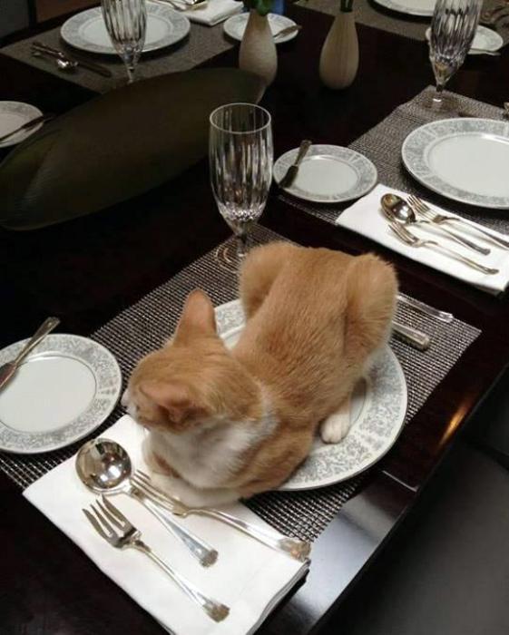 Главное блюдо праздничного стола. | Фото: fishki.net.