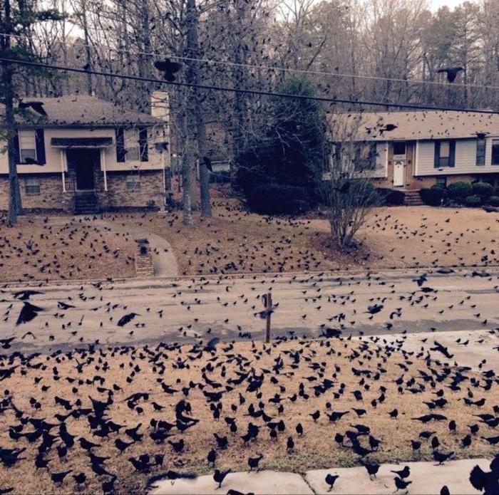 Подозрительное нашествие птиц. | Фото: Pinterest.