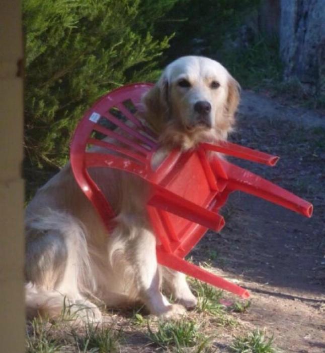 Заложник стула.