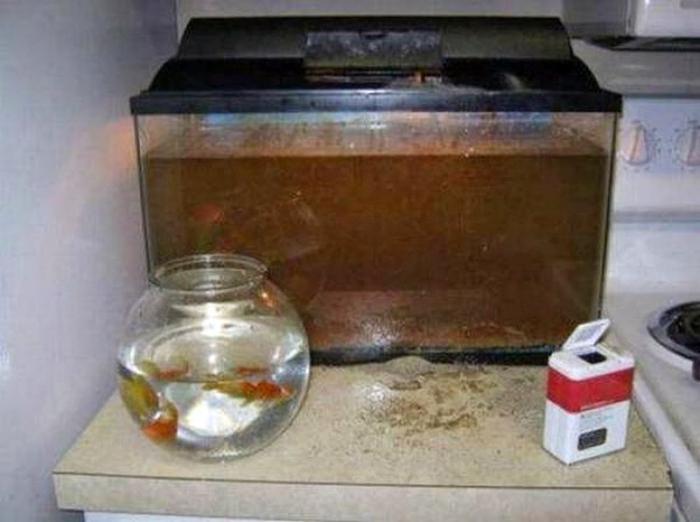 Какао в аквариуме.