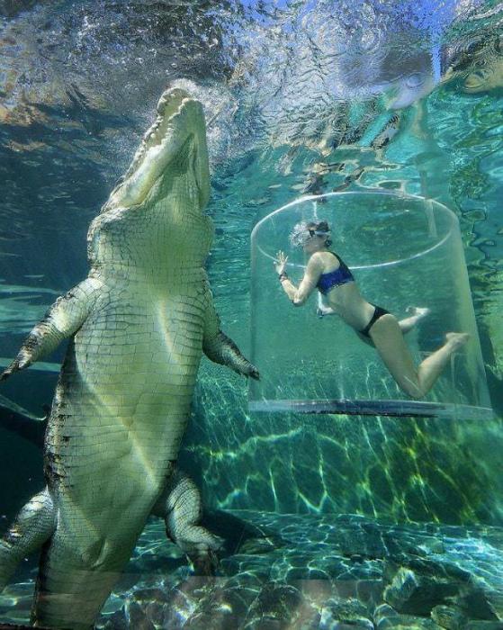 Ныряние с морским крокодилом.