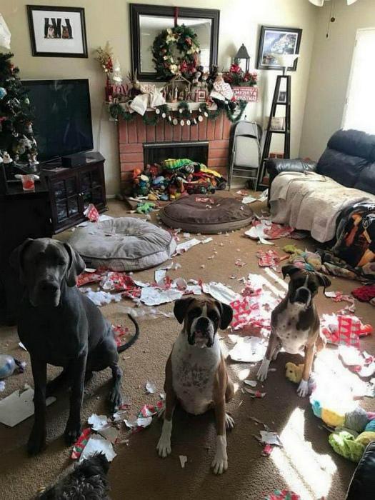 Развернули подарки раньше времени. | Фото: pixmafia.com.