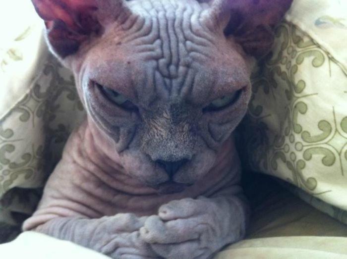 Зловещий котик.
