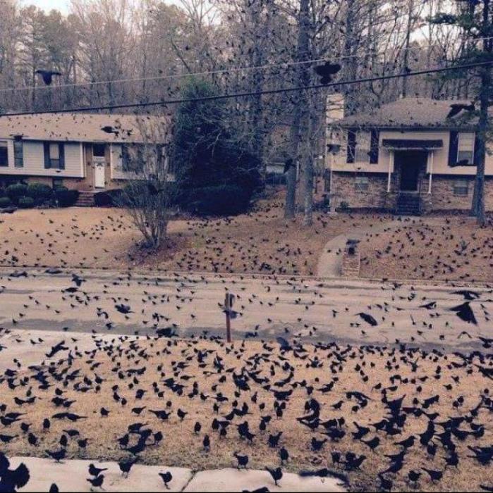 Нашествие птиц.