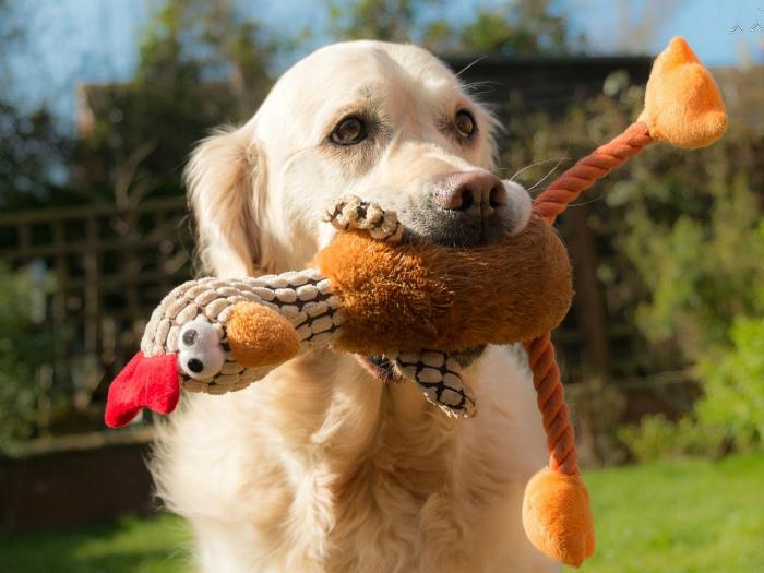 Каждый раз когда собака играет с пищащей игрушкой, она будто бы ее убивает.