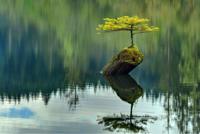 Дерево на островке.