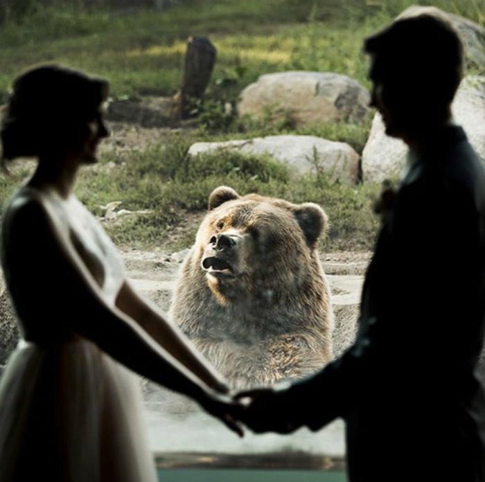 По мнению Novate.ru, эта парочка не на шутку огорчила медведя.  | Фото: Pinterest.