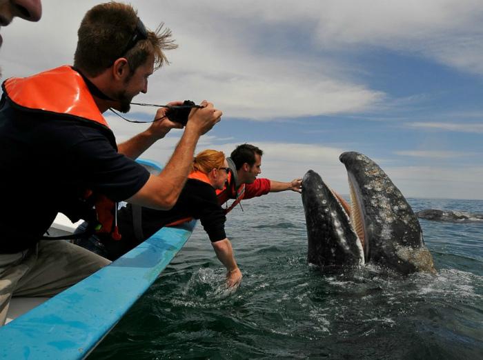 В Великобритании запрещено гладить китов. | Фото: Lololo.ru.