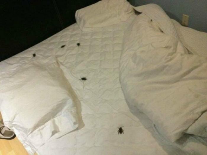 Какие реалистичные жуки. | Фото: Фишки.нет.