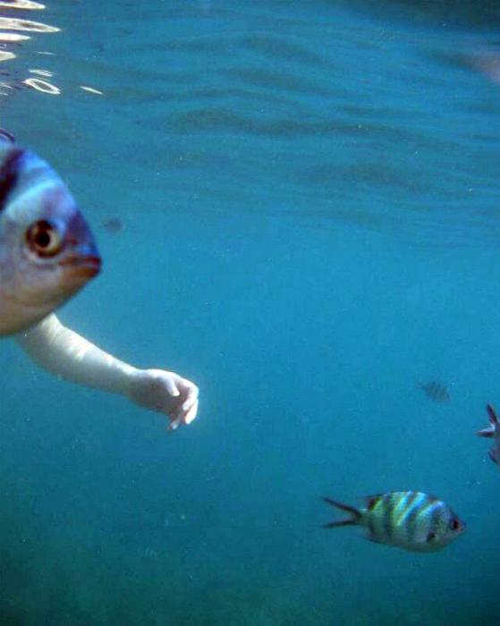 Рыба с рукой.
