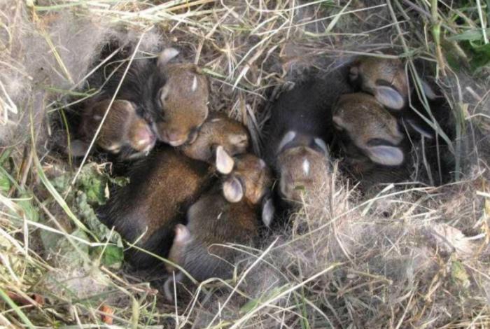 Маленькие кролики в траве.