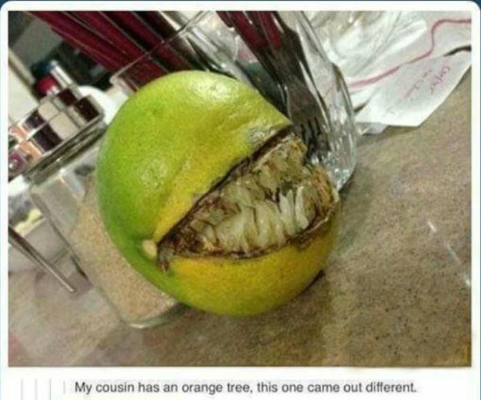 Чудовищный плод.