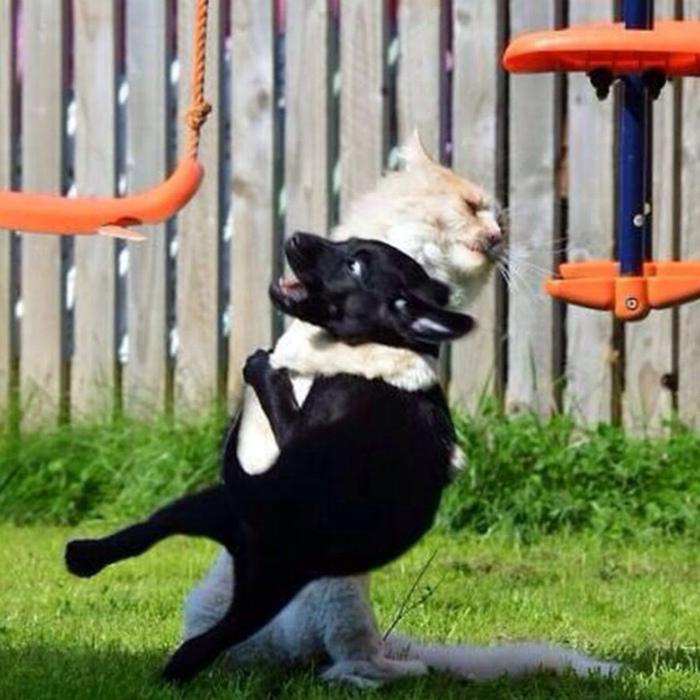 Кот-каратист.