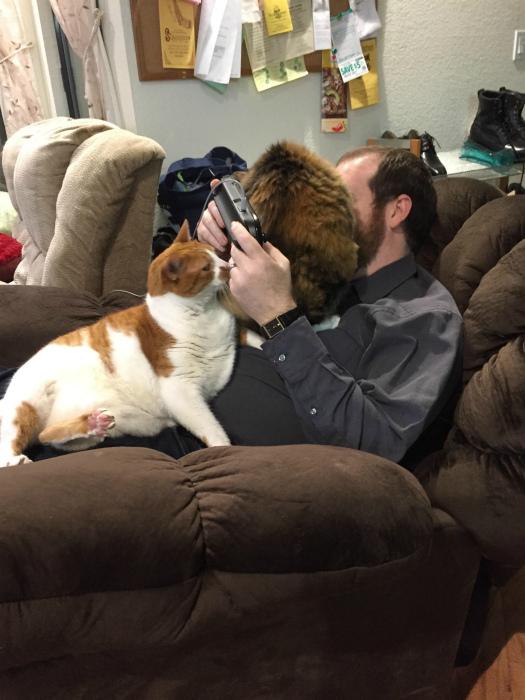 Ревнивые коты атакуют!
