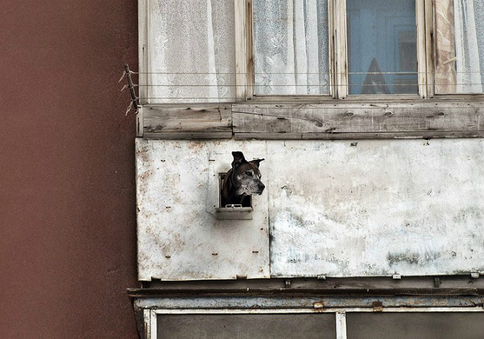 Окно для собаки.