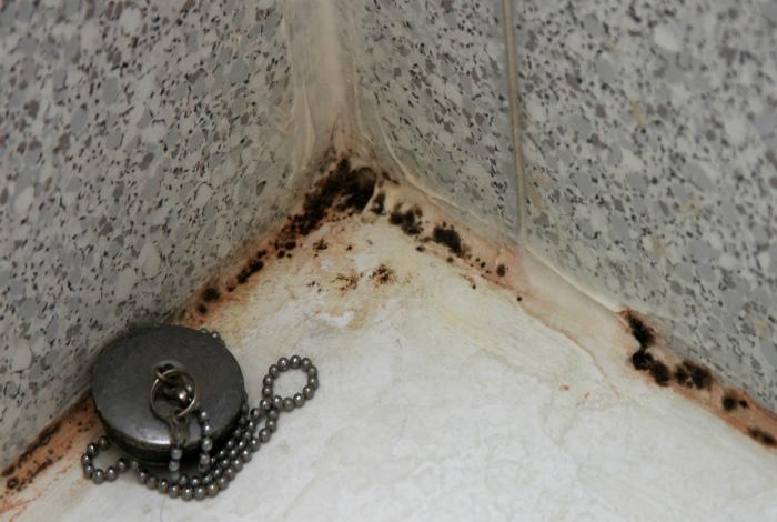 Грибок в ванной комнате.