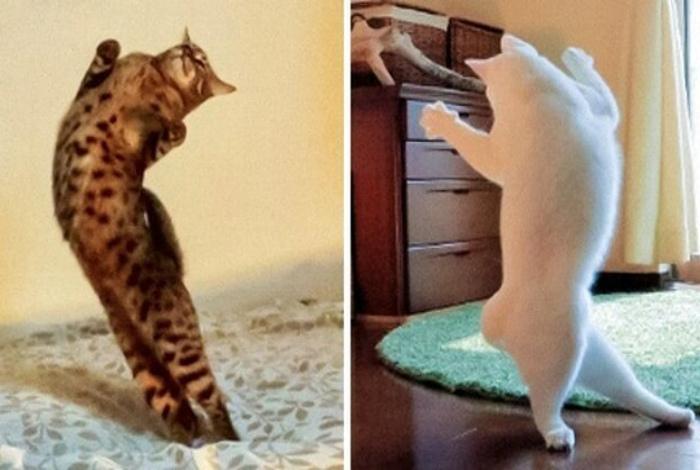 Кошачьи танцы на Novate.ru. | Фото: LiveInternet.