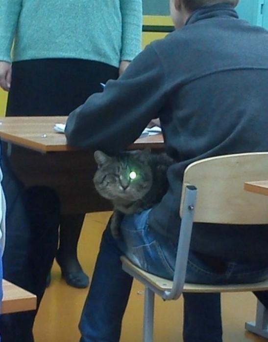 Подмигивающий кот.