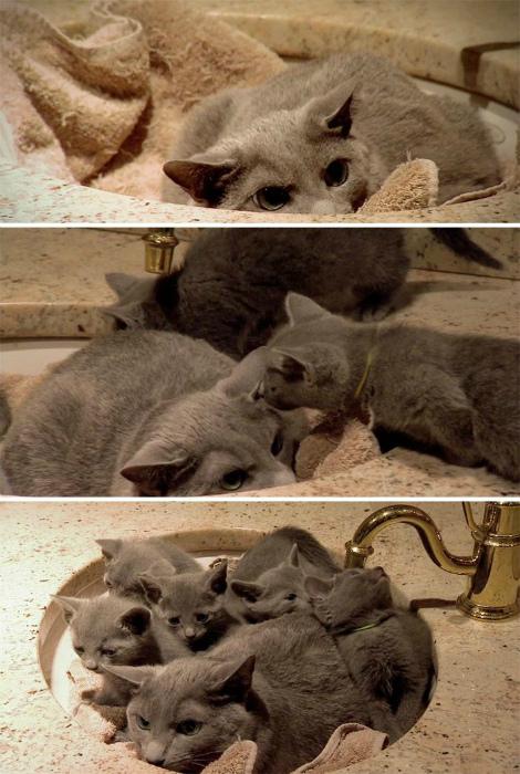 Семейство в раковине.