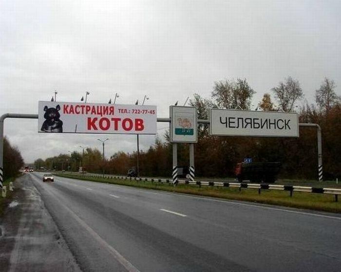 Кастрация котов - главное развлечение в Челябинске.