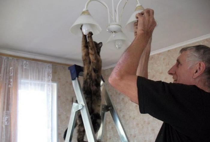 Кот электрик.