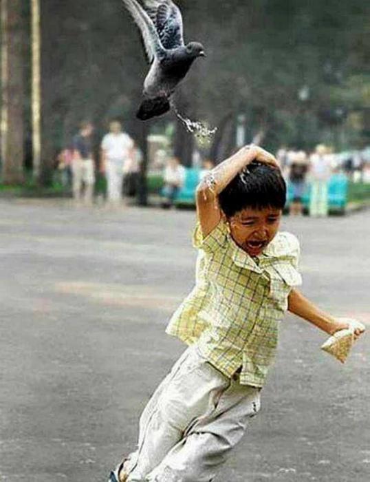 Враг птицы.