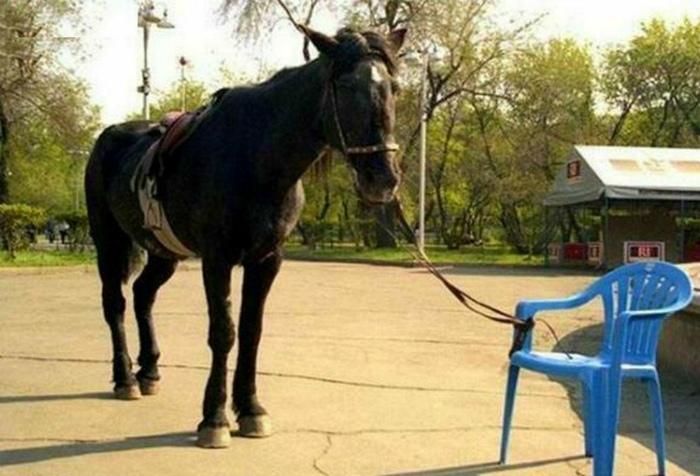 «Да, пластиковый стульчик решит проблему!» | Фото: Toluna.