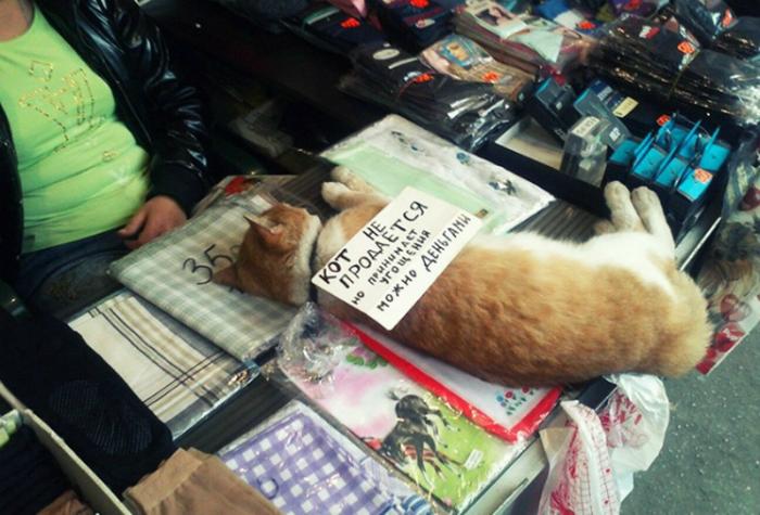 Кот, принимающий дары.