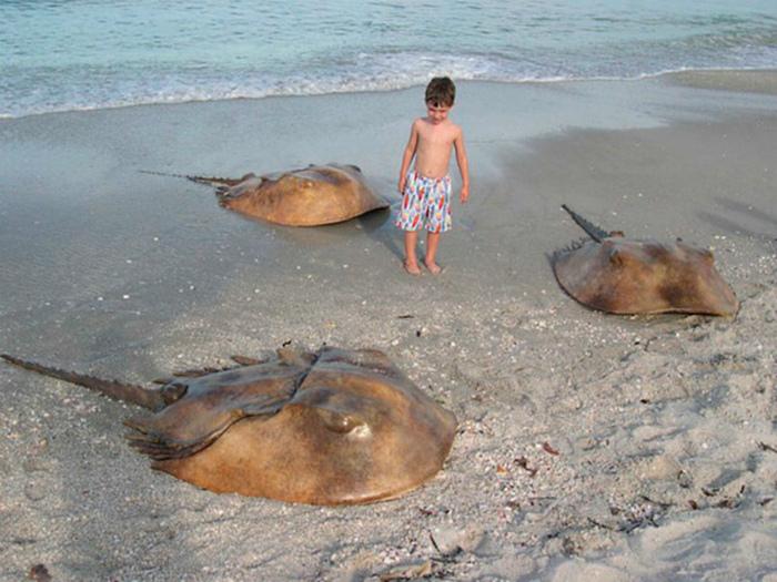 Обитатели побережья.