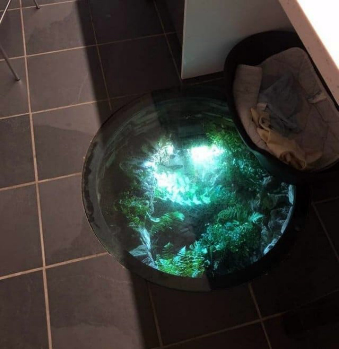 Флорариум в полу. | Фото: от 123ru.net.