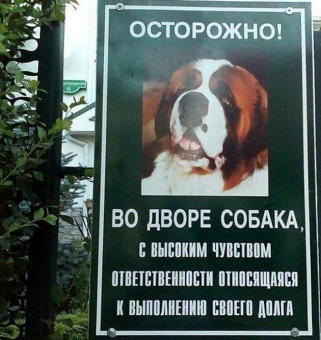 Пес с высокими моральными принципами!