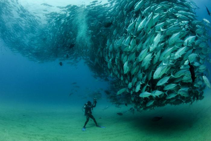 Туча рыб.