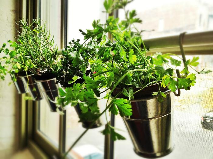 Подвесной сад на окне.