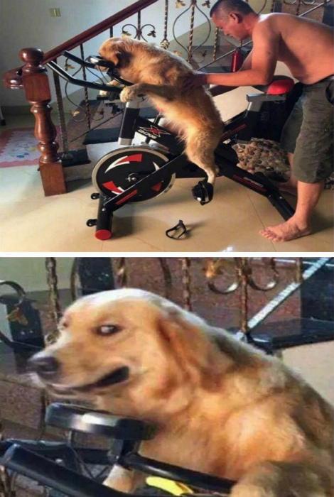 Скучающий отец взялся за обучение собаки.
