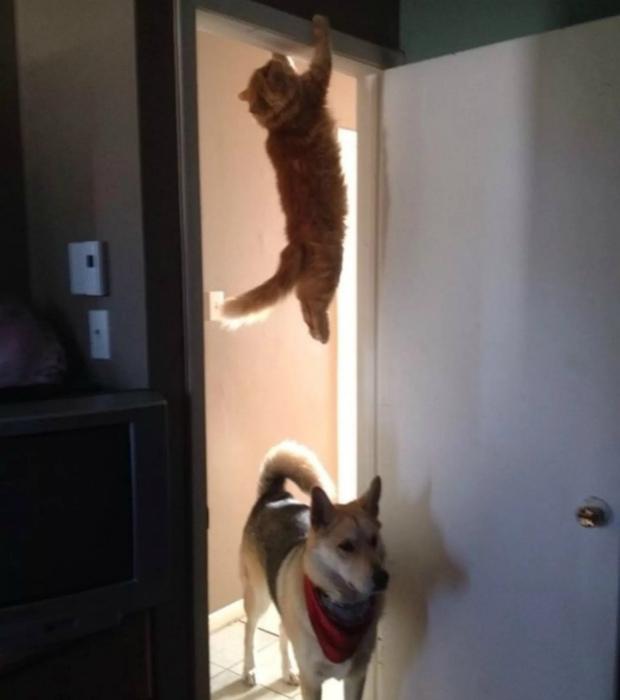 По мнению Novate.ru Барсик отлично подтягивается, как для кота. | Фото: Demotywatory.