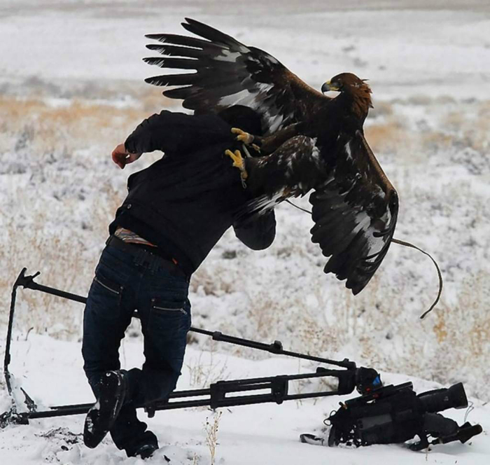 Орел и фотограф.