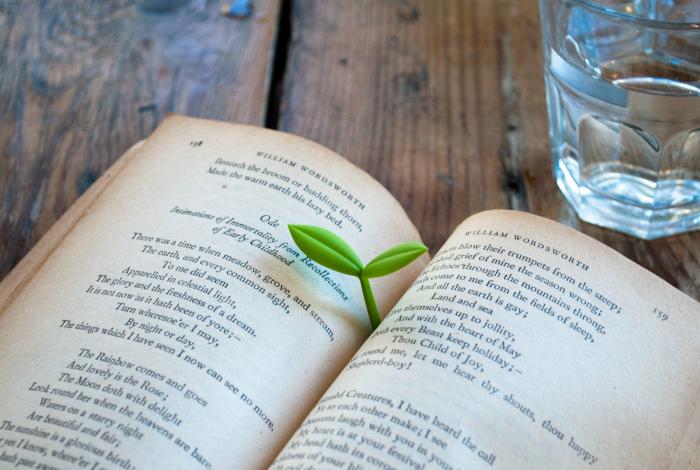 Очаровательная книжная закладка в виде ростка из силикона.