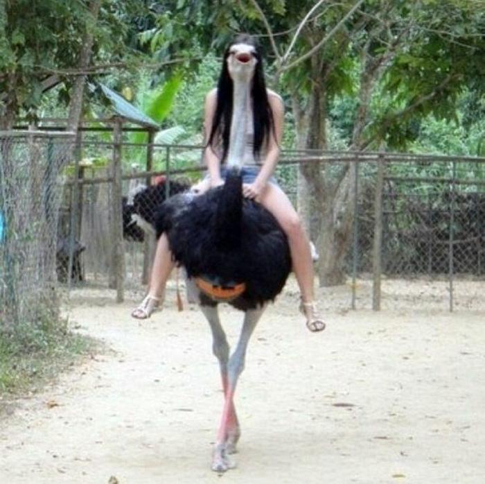 Леди страус.